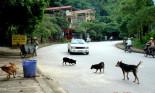 Đâm thẳng không phanh vào con chó băng ngang đường: có ác quá không?