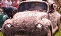Chùm ảnh: Kì quặc xe mèo, bọ cạp