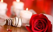 Phát hiện mới: Mùi hương hoa hồng có thể làm giảm 64 % số lượng tai nạn ô tô