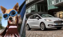 Có thể bạn không tin nhưng bảo hiểm giành cho chó lại cao hơn cả ô tô