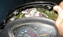 Chuột làm tổ trong xe và nguy cơ chập điện