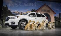 Subaru Ascent 2019 dáng \'hiền\' hơn, giá từ 30.000 US