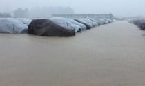 Huyndai Thành Công đính chính lô xe 137 chiếc Grand i10 không bị ngập nước