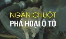 Làm thế nào ngăn chuột phá hoại ô tô