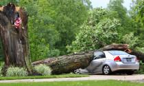 Làm thế nào để phòng tránh cây đổ trong mùa hè
