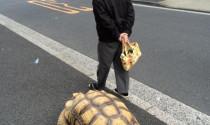 Bị xử phạt thế nào khi dắt thú cưng tham gia giao thông?