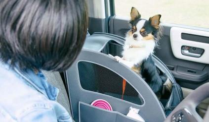 Honda giới thiệu bộ trang bị trên xe cực đáng yêu dành cho chó